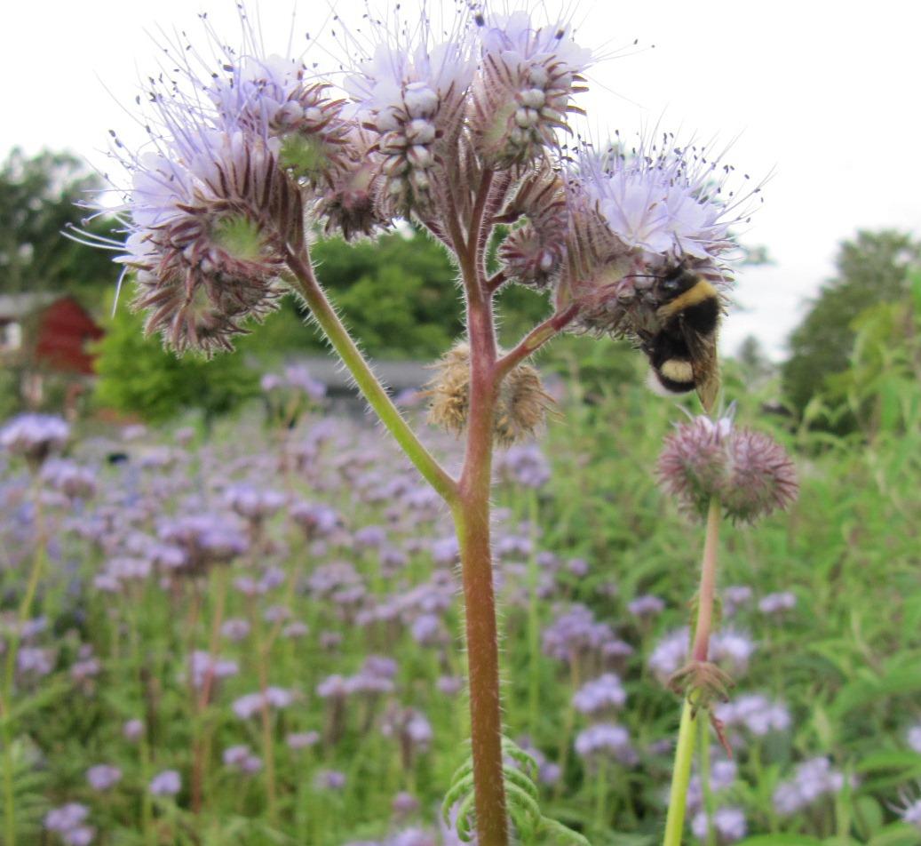 Biplantelister for ulike pollienerande insekt