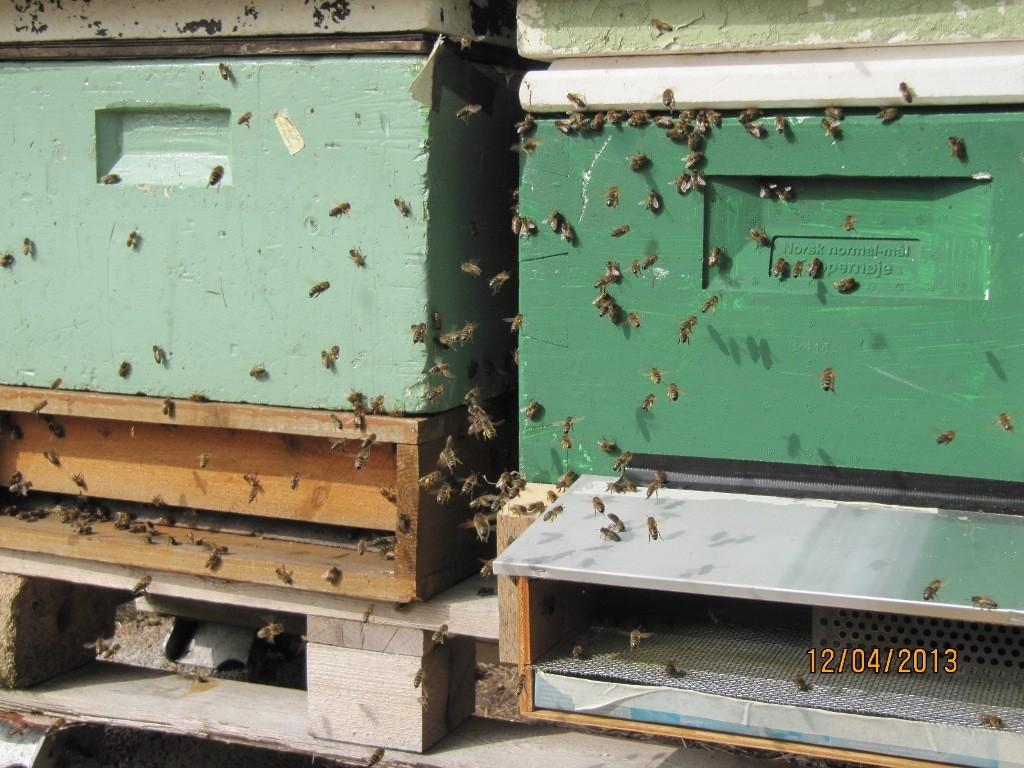 tilvenning av pollenefeller